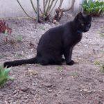 Шукаю!!!Втік чорний котик